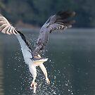 The Sea-eagle Shake by byronbackyard