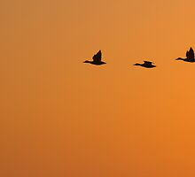 Silhouetted Geese at Sunset by 2xTap