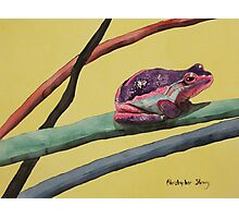 Coloured frog lives in a coloured world Photographic Print