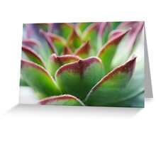 Succulence Greeting Card