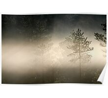 9.6.2014: Pine Trees in the Mist Poster