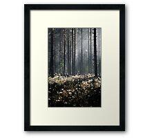 9.6.2014: Wild Rosemary Flowers in Forest Framed Print