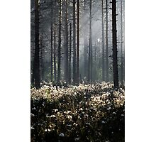 9.6.2014: Wild Rosemary Flowers in Forest Photographic Print