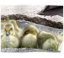 Little Goslings Poster
