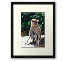 African monkey - Print Framed Print