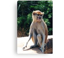 African monkey - Print Canvas Print