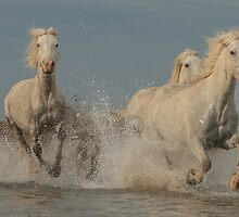 Three Camargue mares racing through the water by Helkoryo