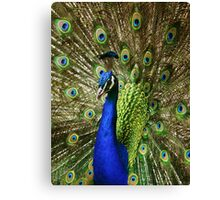Proud as a... Canvas Print