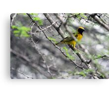 The Weaver Bird Canvas Print