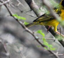 The Weaver Bird Sticker