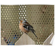 Bird on the fence Poster