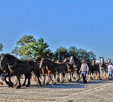 Working Horses Corryong 2013 by Graeme-Mellor