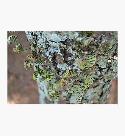 Parasite Plant Seventeen Photographic Print