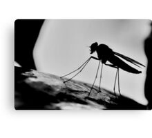 Snipe Fly Silhouette   [ PVL ] Canvas Print