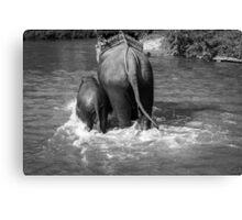 BW Elephants Canvas Print