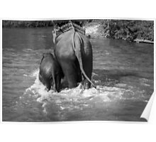 BW Elephants Poster