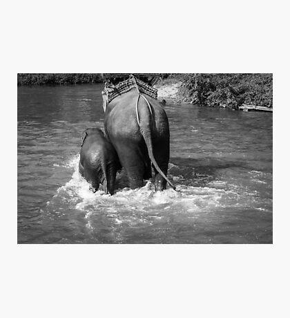 BW Elephants Photographic Print
