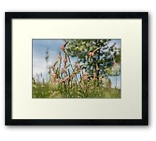 Wild and Pink Framed Print