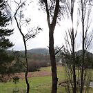 Looking across Farmland, Lithgow, Blue Mountains, New South Wales. by Rita Blom
