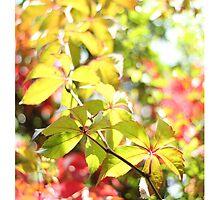 Autumn Virginia Creeper by AlysonArtShop
