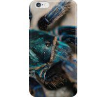 Chromatopelma cyaneopubescens iPhone Case/Skin