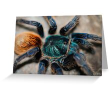 Chromatopelma cyaneopubescens Greeting Card