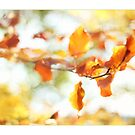 Abstract Autumn Leaves. by AlysonArtShop
