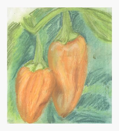 Two Orange Peppers Photographic Print