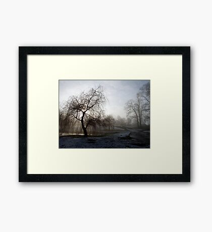 Willow in the Mist Framed Print