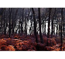 Autumn Morning - Bucklebury Photographic Print