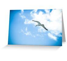 Seagull #3 Greeting Card