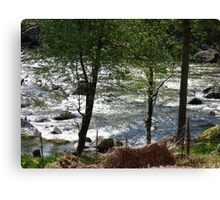 River glistening in the sun viewed through the trees Canvas Print