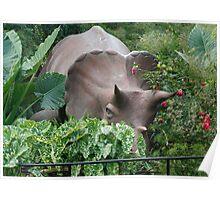 Arrhinoceratops Poster