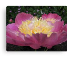 Perfect Peony side view Canvas Print