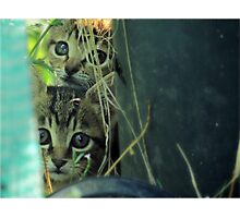 Cute Kittens Photographic Print