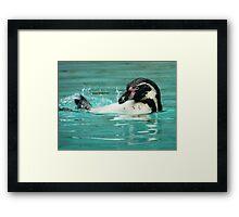 Penguin swimming  Framed Print