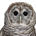 Barred Owl #2 by Rose Santuci-Sofranko