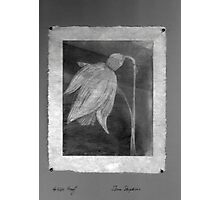 Snowdrop on Japanese Paper  Photographic Print