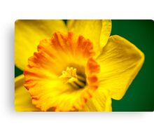 Yellow Daffodil Canvas Print