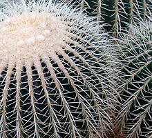 Cactus Spines by Steve