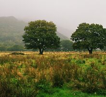Welsh Greenery by Lee  Gill