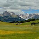 The flowering at Seiser Alm by annalisa bianchetti