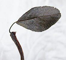 One Leaf by Evita