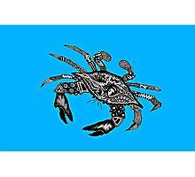 Maryland Blue Crab Photographic Print