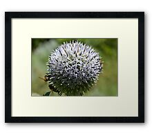 The Bees Vol.1 Framed Print
