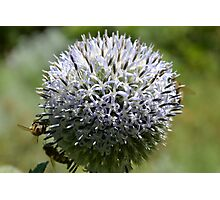 The Bees Vol.1 Photographic Print