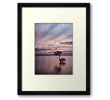 Mangrove Tree at Wellington Point Framed Print