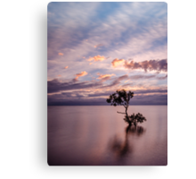 Mangrove Tree at Wellington Point Canvas Print
