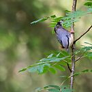 Nuthatch by M.S. Photography/Art