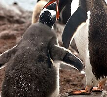 Mum Feeding Chick by Marylou Badeaux